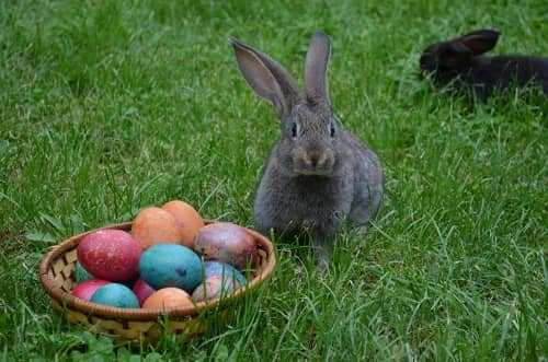 Bunnies near a basket filled with coloured eggs